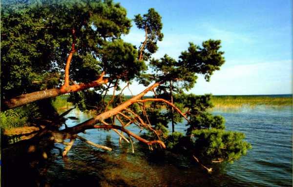 Национальный парк нарочанский беларусь :: национальный парк нарочанский